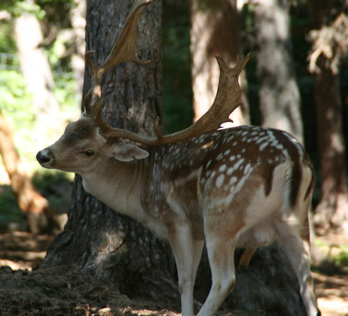 La Cuniacha, animales salvajes, nature, fauna, casa rural pirineo, pyreness