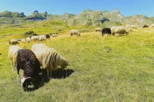 ventajas-reserva-alojamiento-rural-en-pirineos
