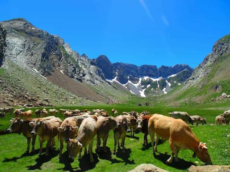 Visitar el Pirineo Aragonés